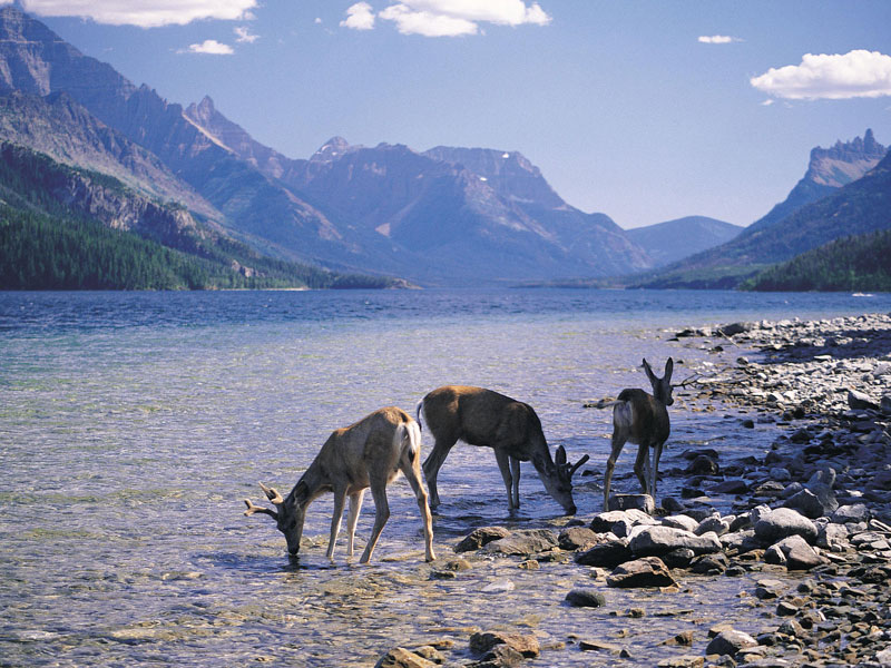 Canadian Trails Train Trips Across Canada | Bow River Canadian Rockies