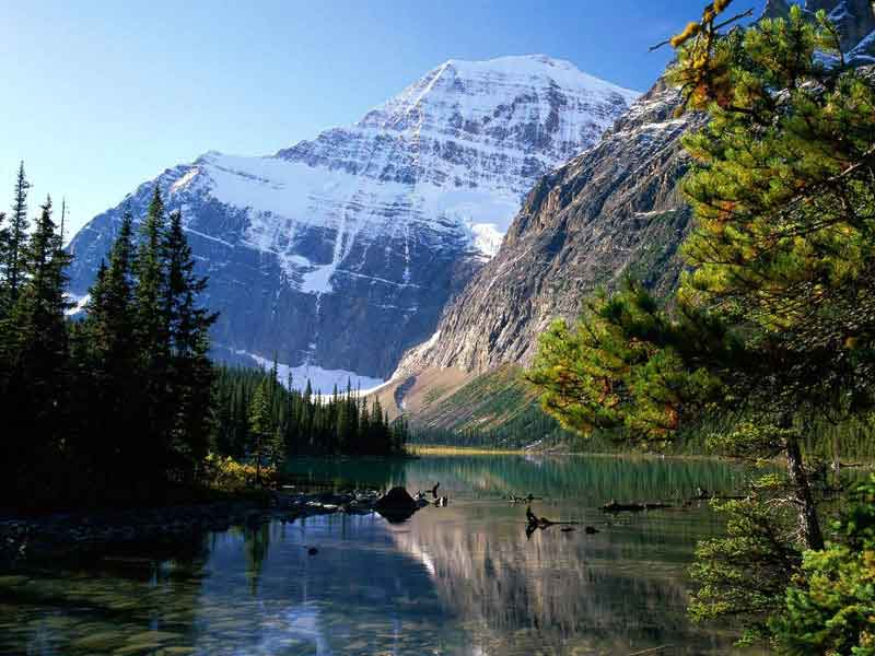 Grizzly Bears & the Canadian Rockies Train Vacation   Canadian Rockies